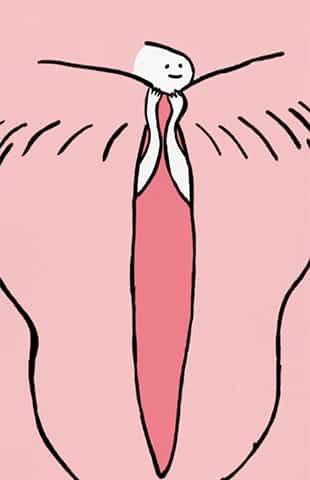 Le clitoris