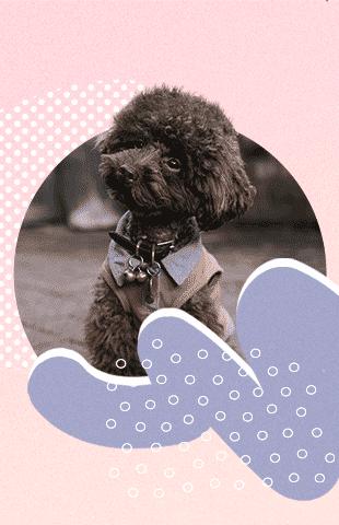 nombres de perros más populares de 2017