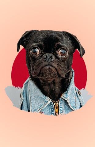 marcas para perros