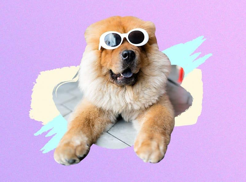 perro en redes sociales